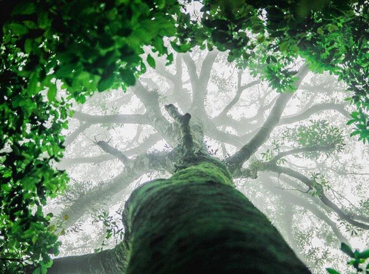 Cùng khám phá vườn quốc gia Tam Đảo